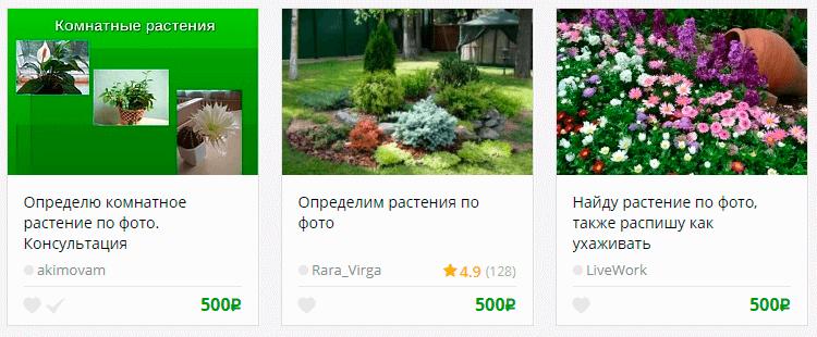 Определим растения по фото