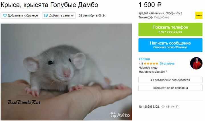 Разведение крыс