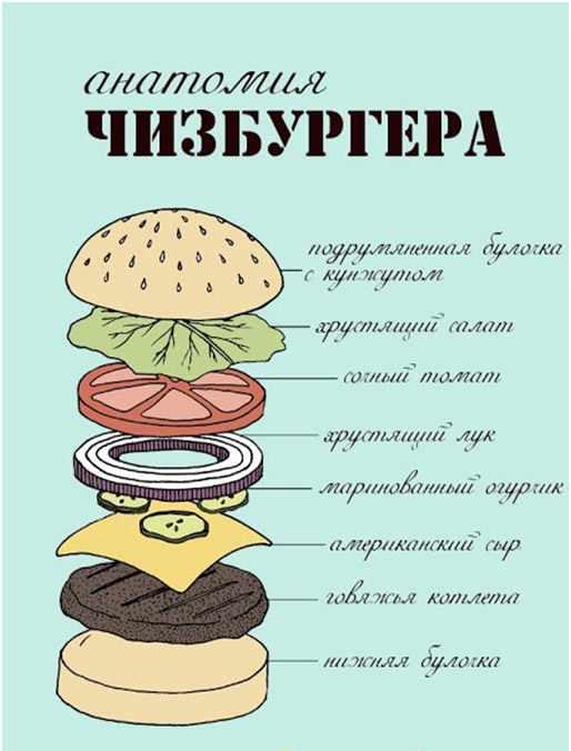 antomija-burgerga