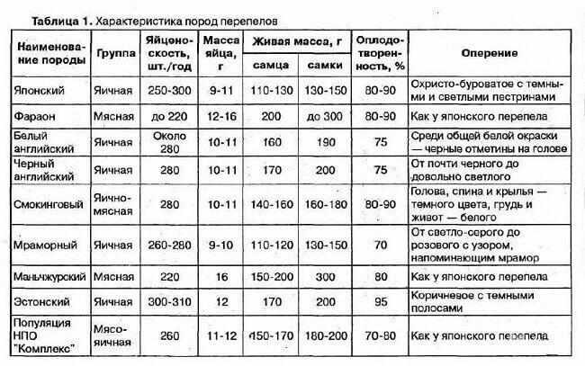 harakteristika-porod-perepelov